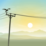 a bird that lands on an electrical line